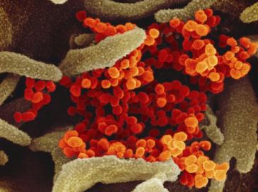 ooss-germ-image